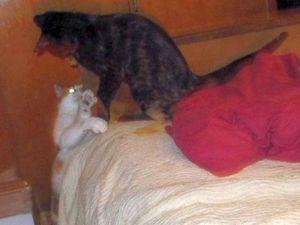 On dirait bien que j'ai vu une grande chatonne. Je crois bien que ça va être ma copine !