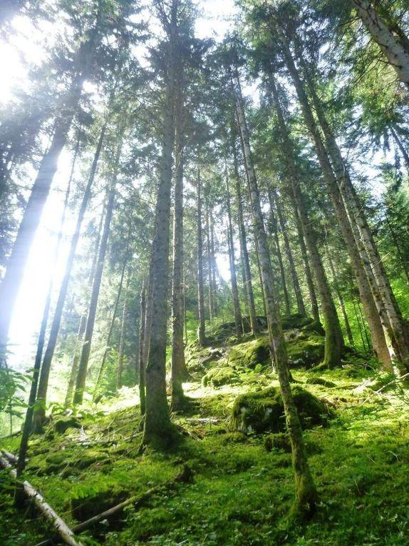 Camps Haute Savoie / Alpes de Hautes Provence