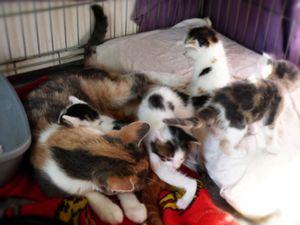 Une maman et ses bébés récupérés
