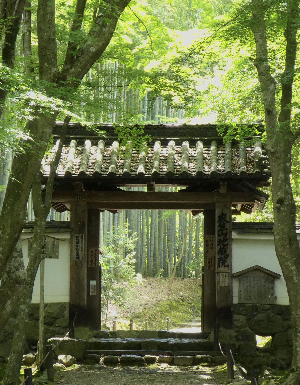 Kyoto: Le temple Jizô-in 地蔵院 avec ses bambous et ses mousses