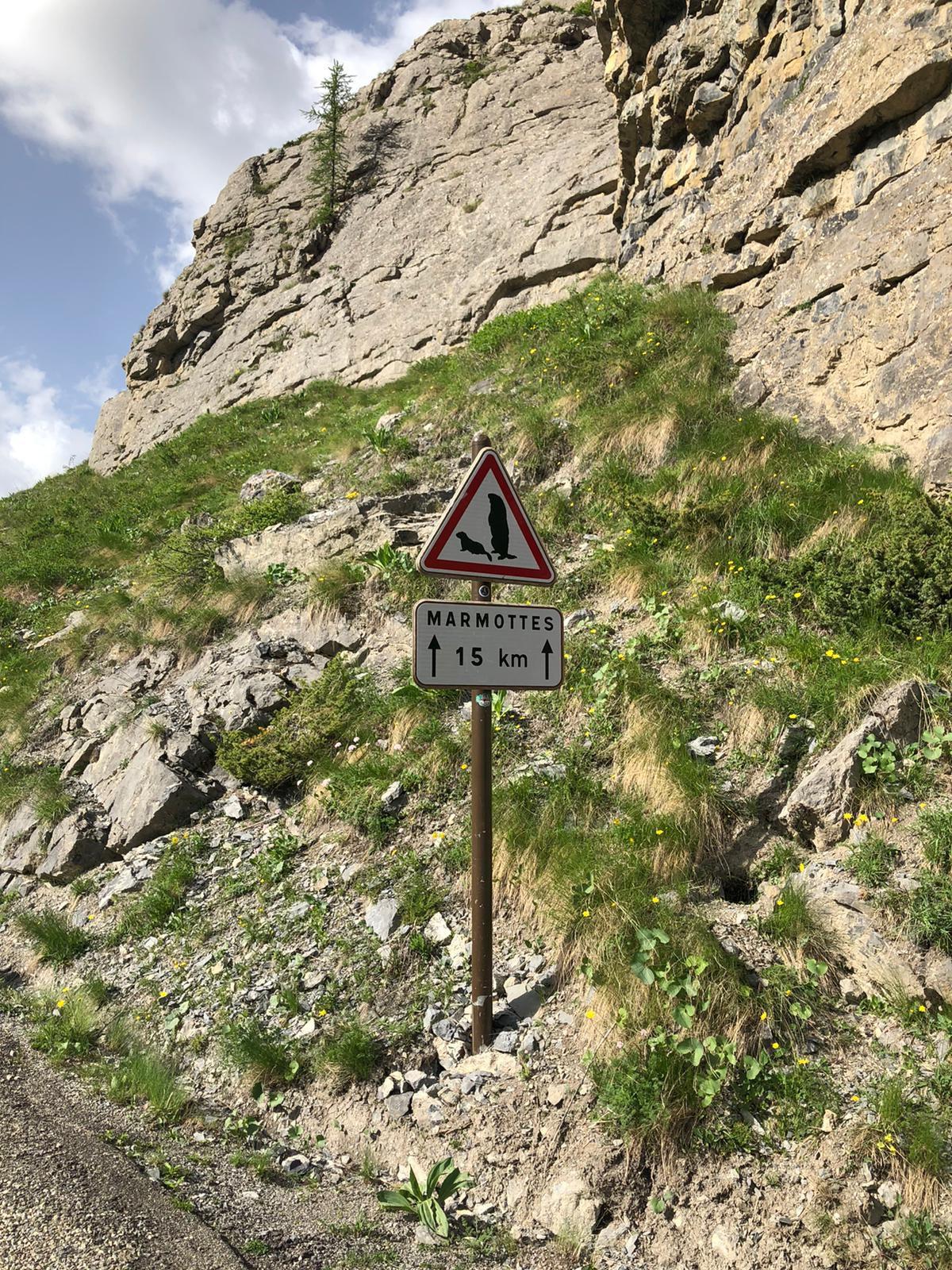 Attention Marmottes en vu.