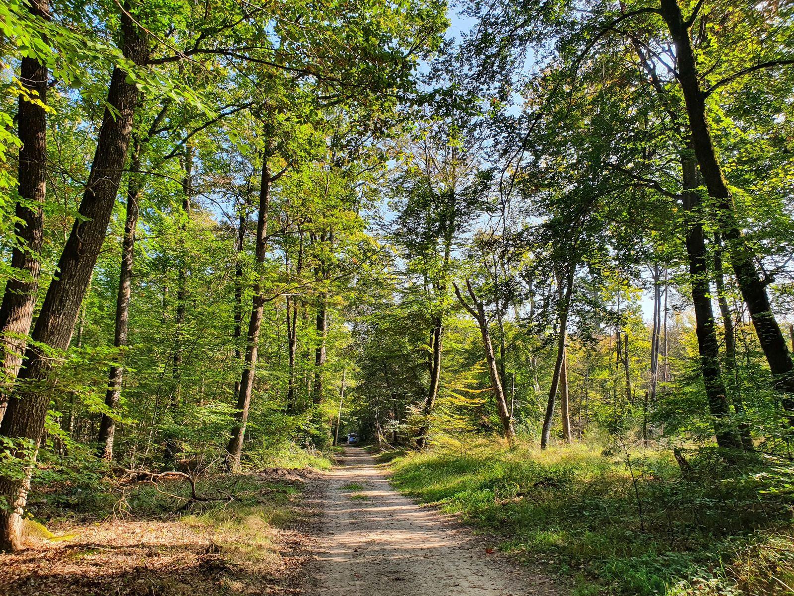Route de la Vallée Creuse, Forêt de Fontainebleau