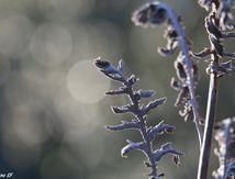 Feuilles et bokeh au soleil d'hiver