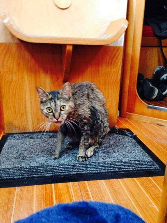 Zouzouille, notre petite chatte qui a toujours vécu sur le bateau !