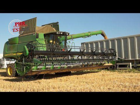 Que devient le blé juste après la moisson ?
