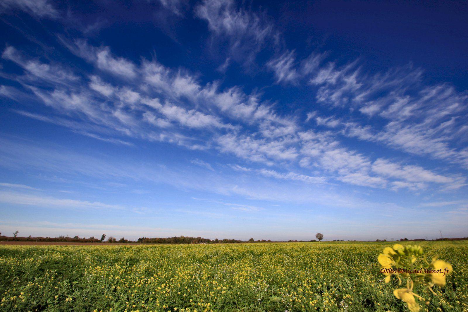 News to share : ''ciel bleu sur un tapis de colza et de phacélie'' ce jour, 31 octobre 2020 ©Michel Hénot Le Breui d'Haleine 86400
