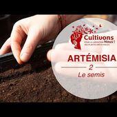 Cultivons-nous ! #2 Faire ses semis d'Artemisia annua !