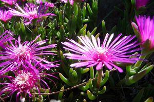 Oh! les belles fleurs