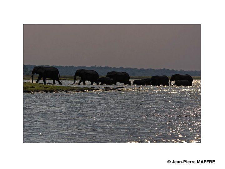 Un vrai paradis peuplé d'animaux sauvages qui vivent dans la savane dont la beauté nous émerveille.