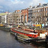 Coronavirus : les Pays-Bas abattent des dizaines de milliers de visons contaminés