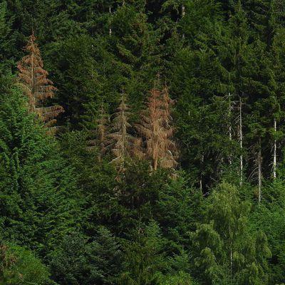 La forêt privée : cri d'alarme et inquiétude des Forestiers
