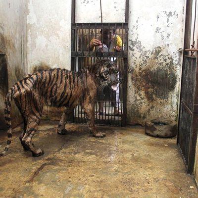 Pétition pour fermeture du Zoo de la Mort