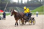 Concours National d'Attelage 30 et 31 Août 2008 à Dinard