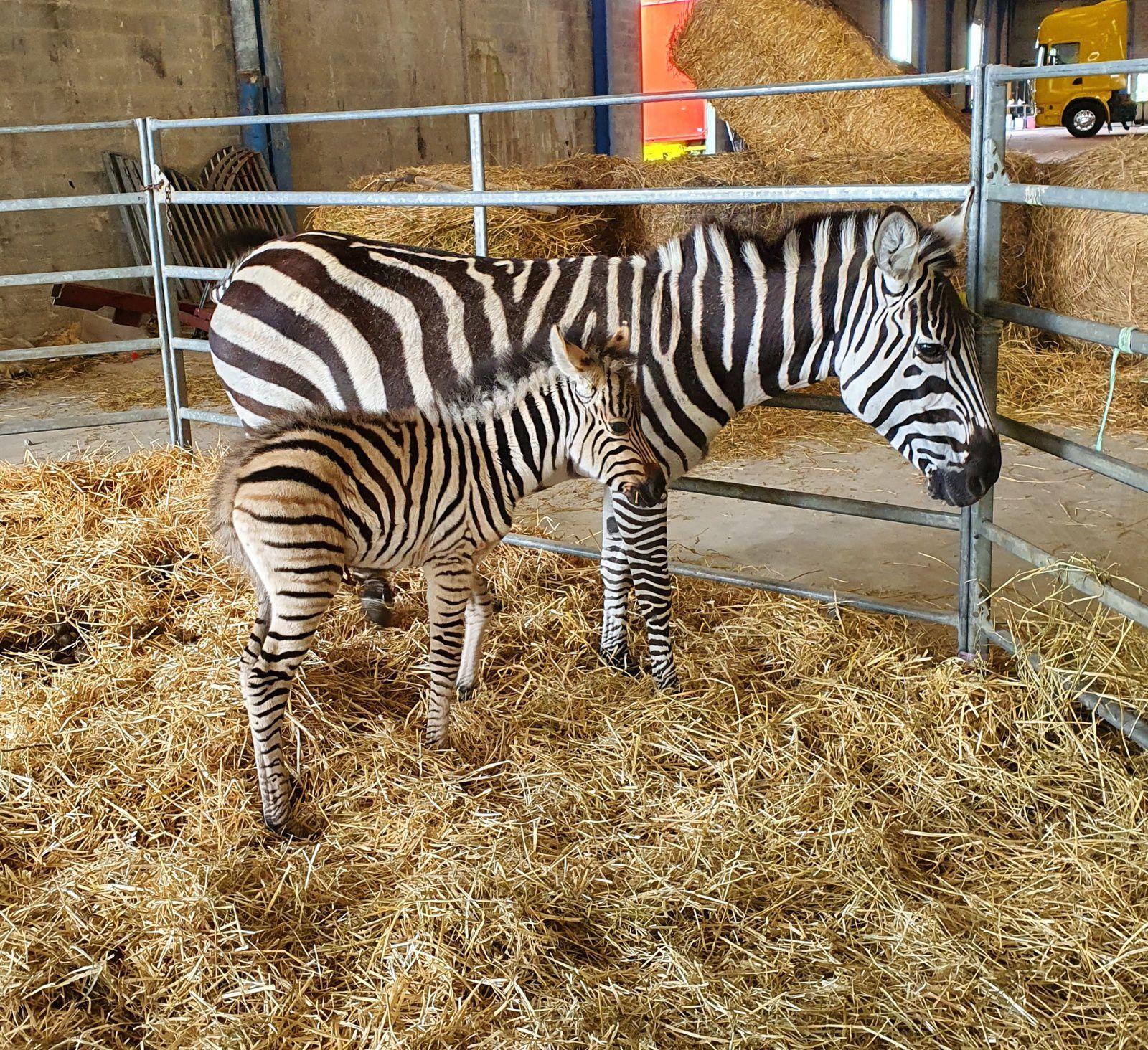 protection animale ,dans un cirque il y a des animaux ,mais aussi des femmes ,des hommes et des enfants