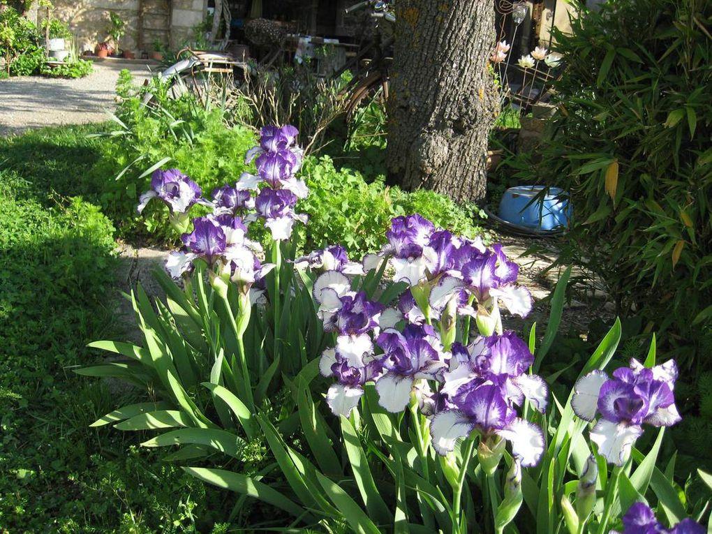 Les Iris et les Tulipes...