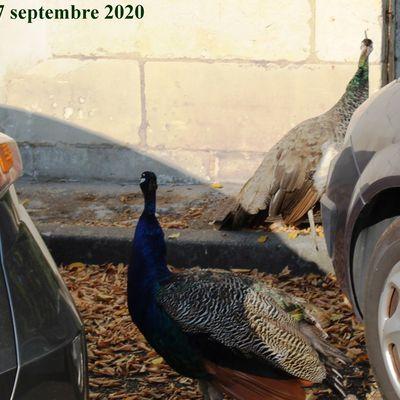 Balade à Saintes - 17 septembre 2020