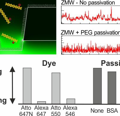 Surface passivation of zero-mode waveguide nanostructures: benchmarking protocols and fluorescent labels