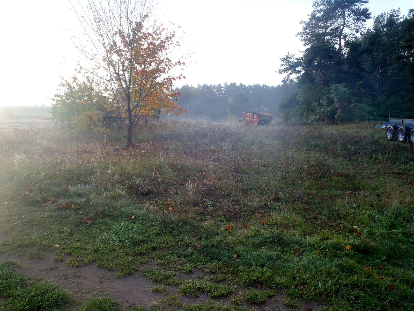 Pilzwanderung im Herbst