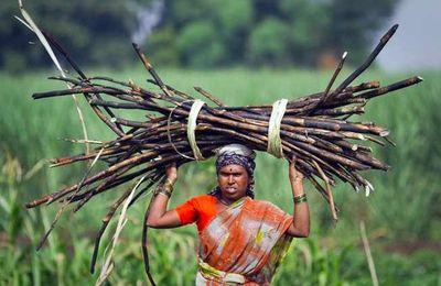 Inde. Des patrons forcent les femmes à une ablation de l'utérus pour augmenter leur productivité