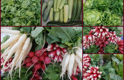 Salades et radis