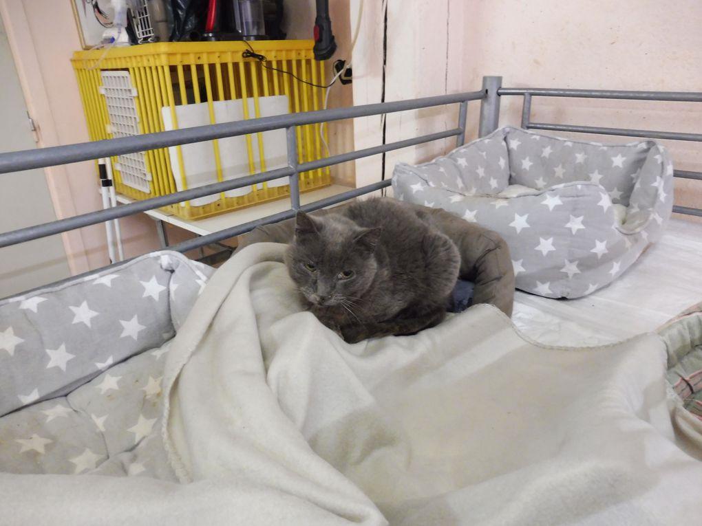 Couchages confortables et couverture polaire sont proposés à nos chats