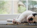 3 mythes sur le sommeil            (A voir dans Futura Sciences)