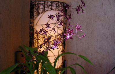 L'Orchidée fait salon