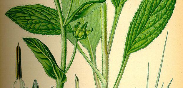 Plantele magice