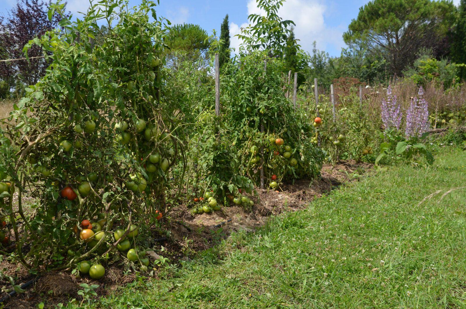 Domaine Les Cyprès - Atelier - jardin - vignes - l'été !