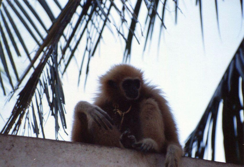 Mon premier voyage en Thailande...