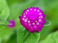Fleurs du jour (28)