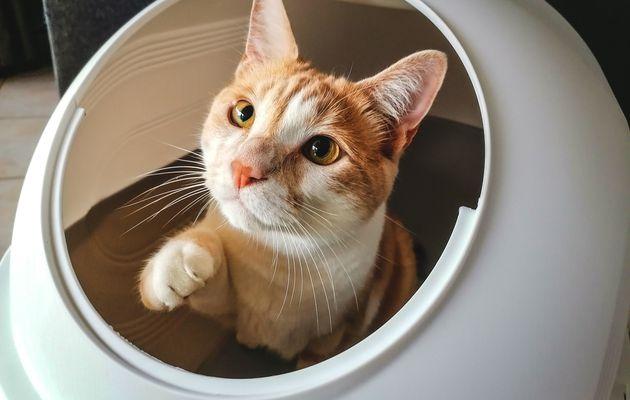 Maison de toilette XXL avec 2 ouvertures pour chat