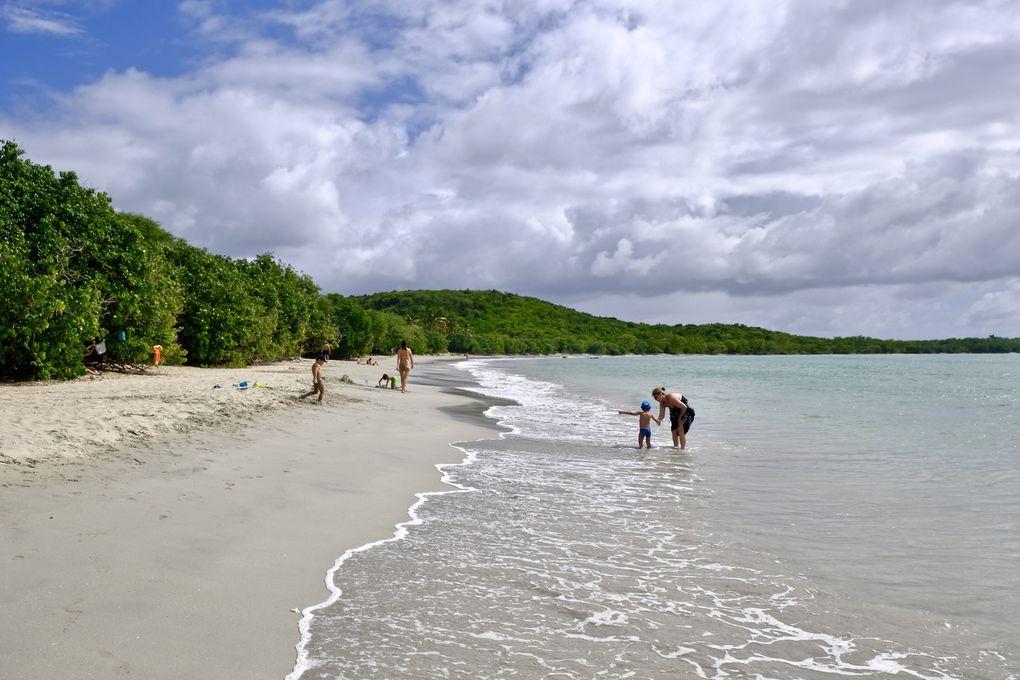En vrac de l'anse à l'âne passant par l'anse Dufour et Noire, deux jolies plages inséparables, notamment pour nos amies les tortues, jusqu'à l'anse Moustique ou Meunier et la carte postale des Salines, laissez vous porter jusqu'à l'anse Michel en un simple coup de vent et de kite surf....les Caraïbes dans sa splendeur, un accès direct au fantasme du sable blanc et du bleu piscine....