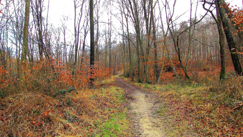 carrefour_Route de la Brèche_Route aux Veneurs