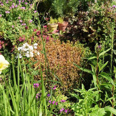 Jardin en chantier : adieu les buis, bonjour les fleurs