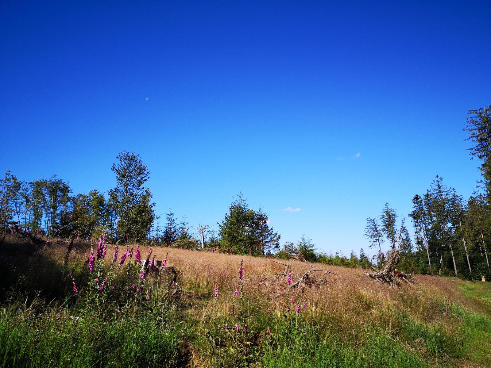 Sur les pentes de la Forêt de Chirgoutte (1025m).