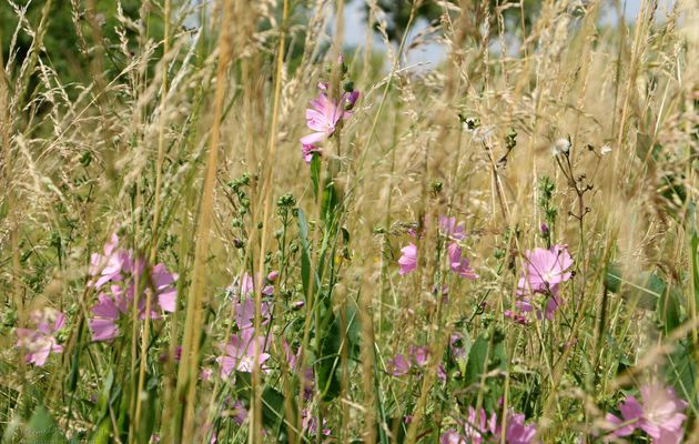 Fleurs des Champs..