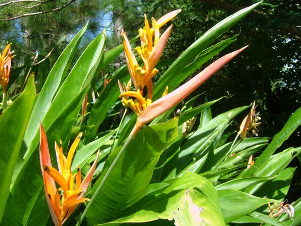 Album - fleurs-plantes-fruits