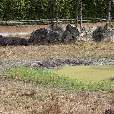 Les rhinoceros au zoo de La Teste...