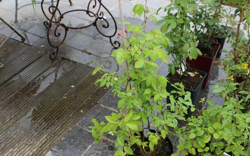 Fête des plantes à Aywiers