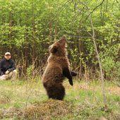 Content from Russie - réserve des ours