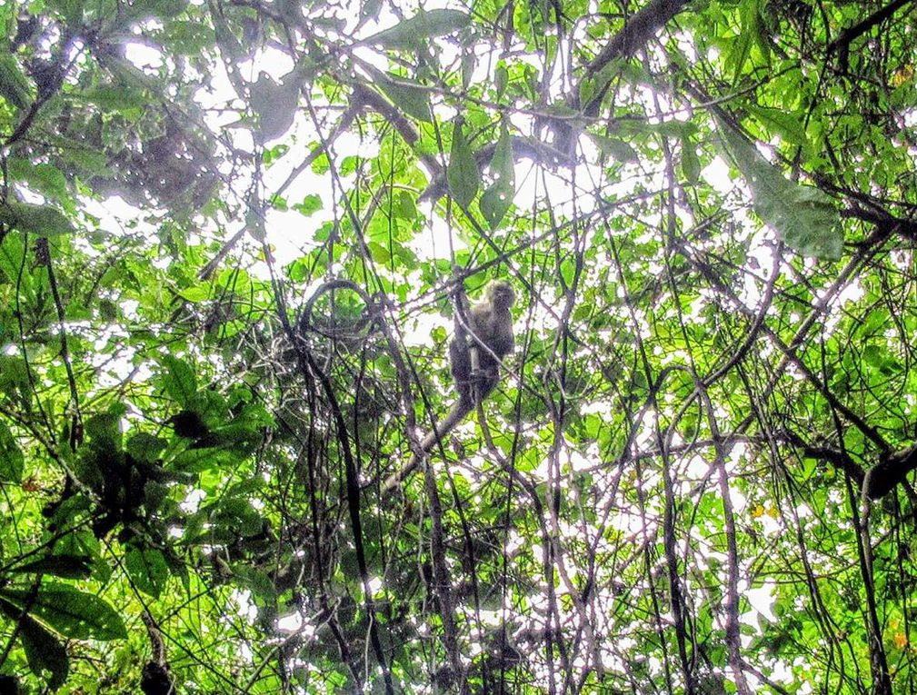 Tayrona, paradis tropical (23/26 aôut 2018)