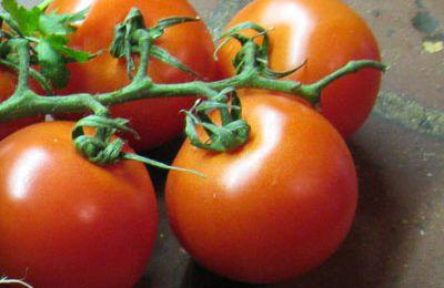 Jardinage écologique au Mas St Jacques à Bompas