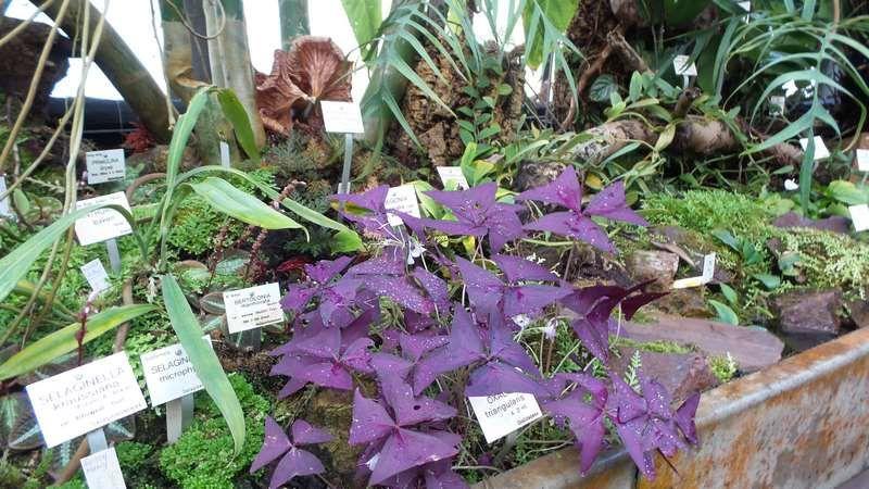 Plantes tropicales du jardin Botanique du Montet, passionnant !
