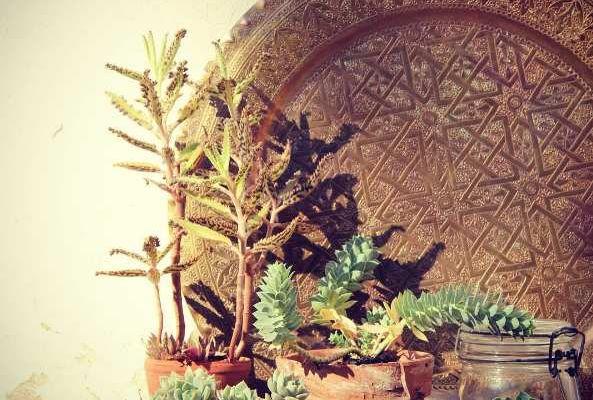 Urban Jungle Bloggers * Plant still life - desert
