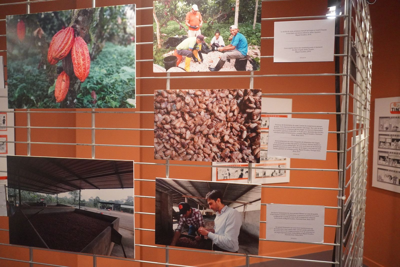 Photo de l'exposition de la découverte du cacao Copyright Hafidabenyacoub