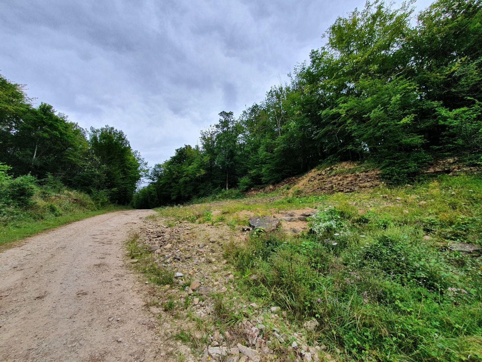 Route d'Orges, forêt de Châteauvillain