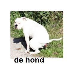 L'instant néerlandais du jour (2015_04_14): de hond