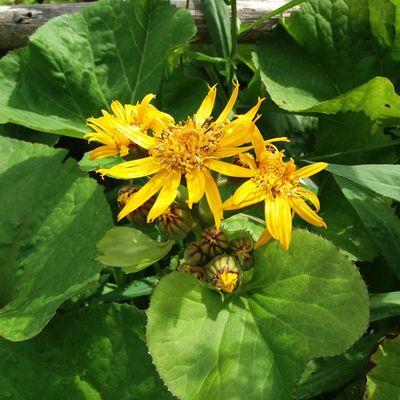 Troisième TROC plantes, le succès !