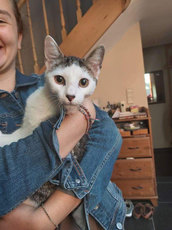A adopter : ANGEL, petit mâle castré de 10 mois, légèrement handicapé